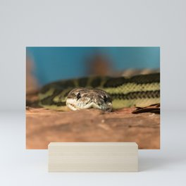 Snaking looking right at you Mini Art Print