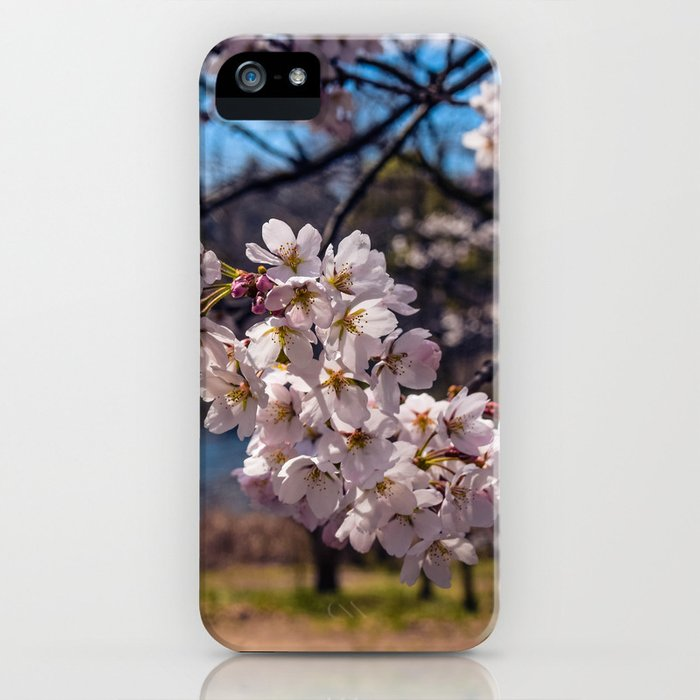 Cherry Blossoms in high Park iPhone Case