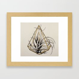 Tillandsia Framed Art Print