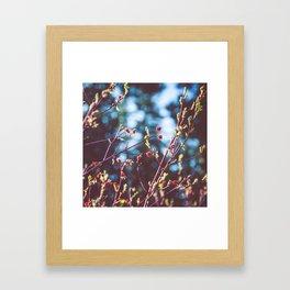 Berries at the Lake  Framed Art Print