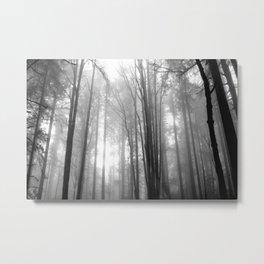 Fogged in Trees Metal Print