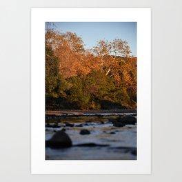 The creek Art Print