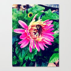 Feeling Vulnerable  Canvas Print