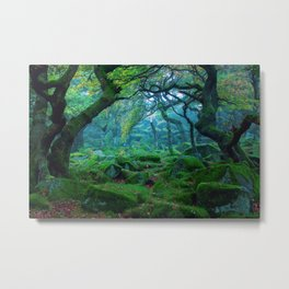 Forest #woods Metal Print