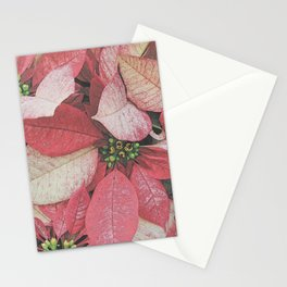Poinsettia Bushel Pattern Stationery Cards