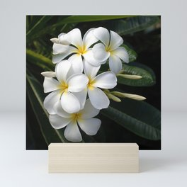 Wild Tropical Hawaiian Plumeria Flowers Mini Art Print