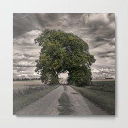tree passage 4 Metal Print