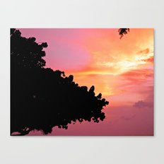 Divi Divi Tree Sunset Canvas Print