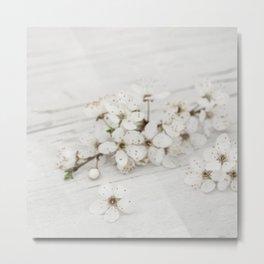 White Spring Sakura Cherry Blossom On Old Wood Metal Print