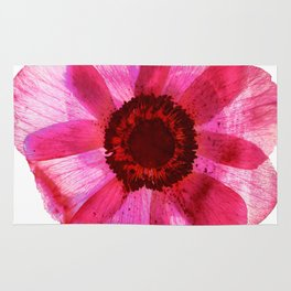 Fragile and beautiful - red anemone in white background Rug