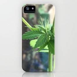 Cannabis Cluster iPhone Case