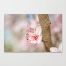 Cherry Blossom Flower Branch Canvas Print