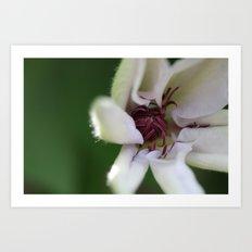 Spider Blooming Art Print