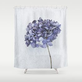 Dried Blue Hydrangea Shower Curtain