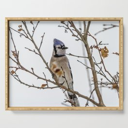 Blue Jay Serving Tray