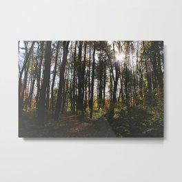 Forest Trail LIV Metal Print