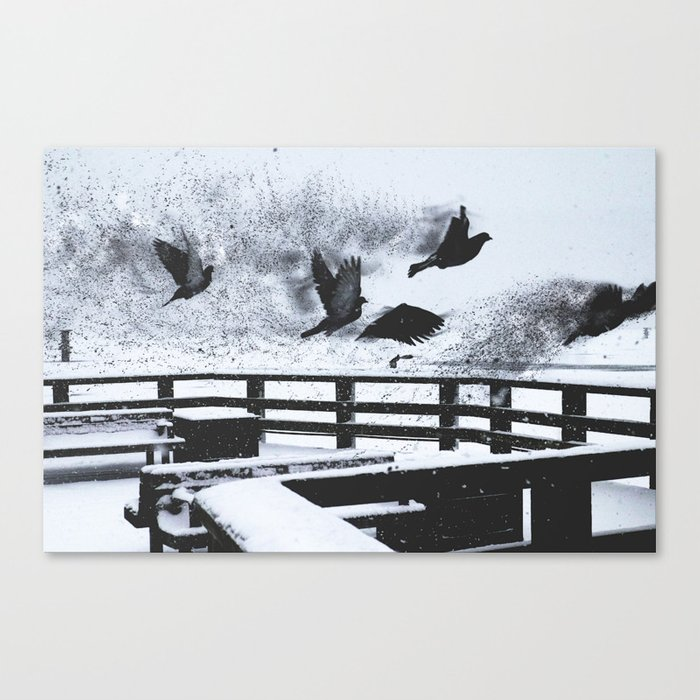 The Last of the Exploding Pigeons Canvas Print