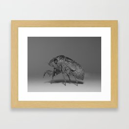Cicada Nymph Framed Art Print