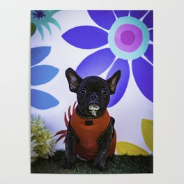 Black French Bulldog Wearing a Red Sweater Sits in front of a Spring Floral Background Poster