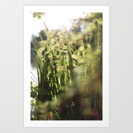 Sunset Botanical 1 Art Print