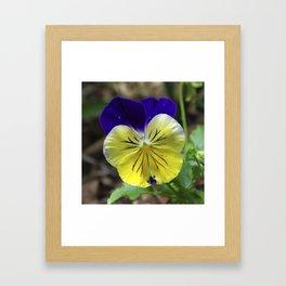 Vivid Viola Framed Art Print