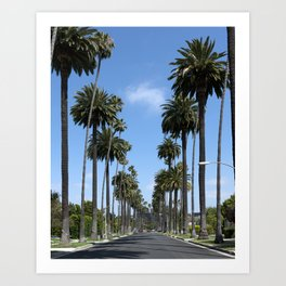 Tall California Palm Trees Photograph Art Print