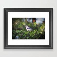 Adult Bluejay Bird Color Photo Framed Art Print