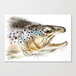 Brown trout Canvas Print