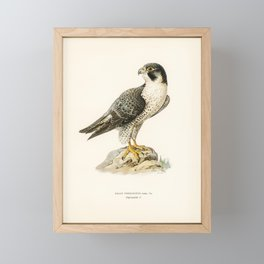Peregrine Falcon (Falco peregrinus) illustrated by the von Wright brothers Framed Mini Art Print