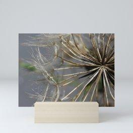 Macro of dandelion seed head Mini Art Print