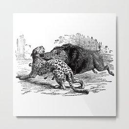 Cheetah v. Boar Metal Print