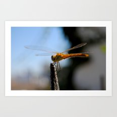 Libélula   Dragonfly Art Print