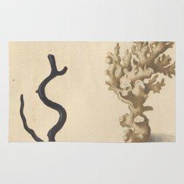 Naturalist Coral Rug