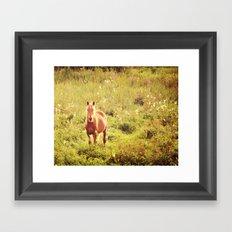 All the Pretty Horses Framed Art Print