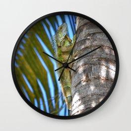 Iguana - Grand Cayman Wall Clock