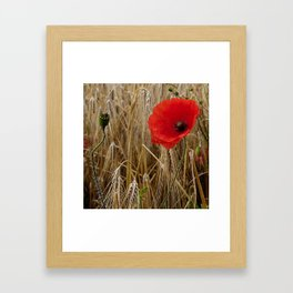 Cornfield Poppy Framed Art Print