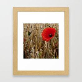 Cornfield Poppy Framed Art Print