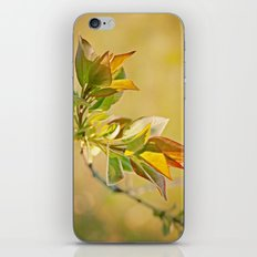Spring Time iPhone & iPod Skin