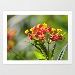 Little Spring Blooms Art Print