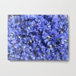 Bed of cornflowers Metal Print