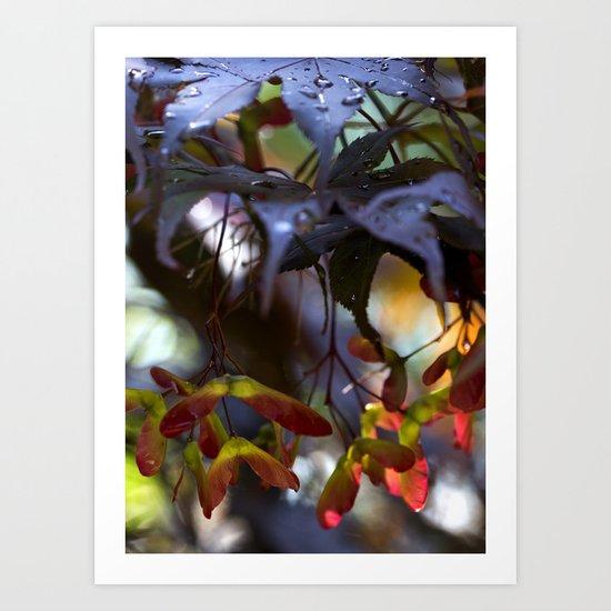Japanese Maple Seeds III Art Print