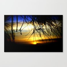 Sunset between pine Needles Canvas Print