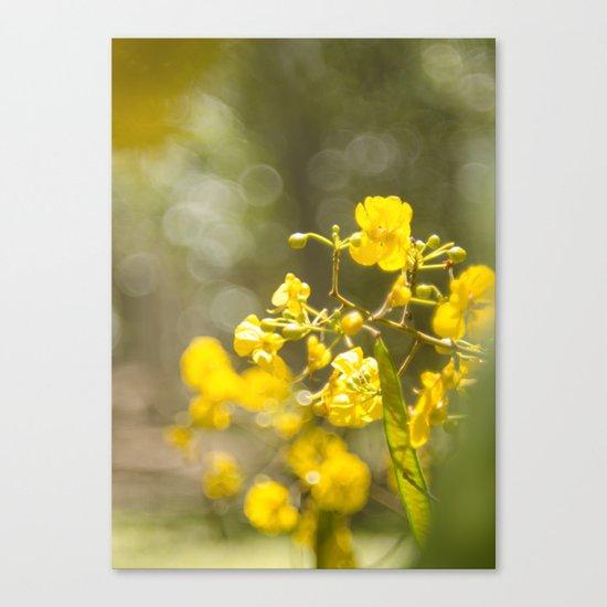 Popcorn Flower Bokeh Delight Canvas Print