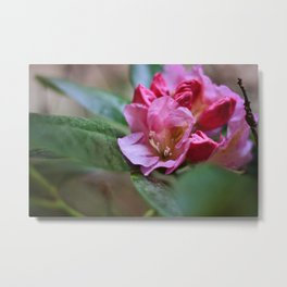 Pretty in Pink3 Metal Print