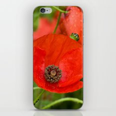 Wild Red Poppies iPhone & iPod Skin