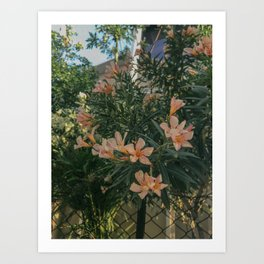 Superblooms Art Print