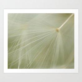 Soft Dandelion Art Print