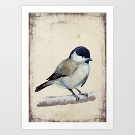 Marsh tit Art Print