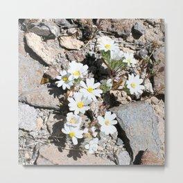 White Desert Flower Metal Print