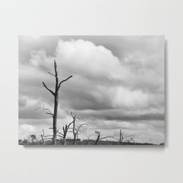 064 | bastrop state park Metal Print
